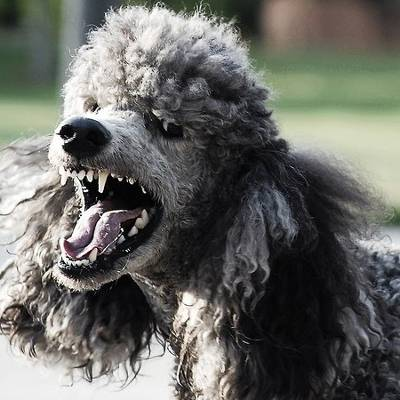 b2ap3_thumbnail_poodle_ssl_vulnerable_400.jpg